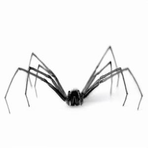 Comment j 'ai accepté de vivre en coloc avec les Araignées